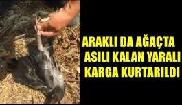 Araklı'da Ağaçta Asılı Kalan Karga Kurtarıldı