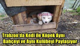 Trabzon'da Kedi ile Köpek Aynı Bahçeyi...